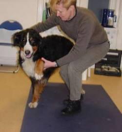 Dierfysiotherapeutische keuring