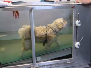 aqua-trainer voor honden