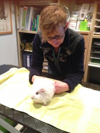 Chiropractie hond - knaagdier